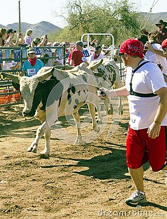 美国亚利桑那公牛运行 编辑类库存照片