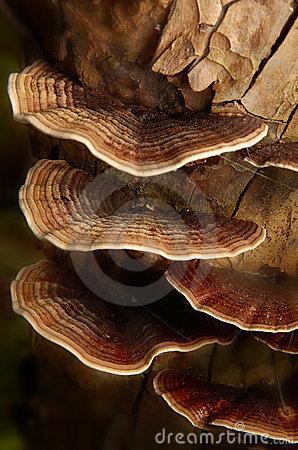 красивейший грибок