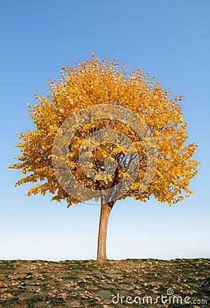 μόνο δέντρο φθινοπώρου