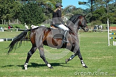 ιππικός αθλητισμός
