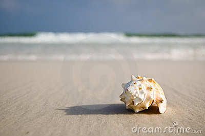 μεγάλα κοντινά κύματα ακτών θαλασσινών κοχυλιών