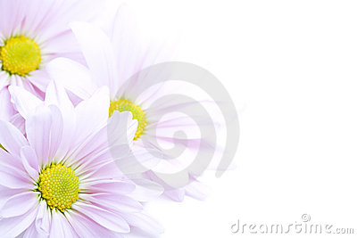 цветки граници