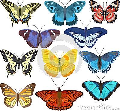бабочки цветастые