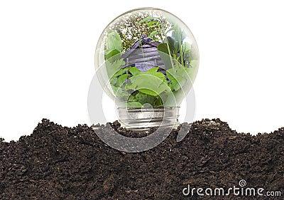 电灯泡生态学光