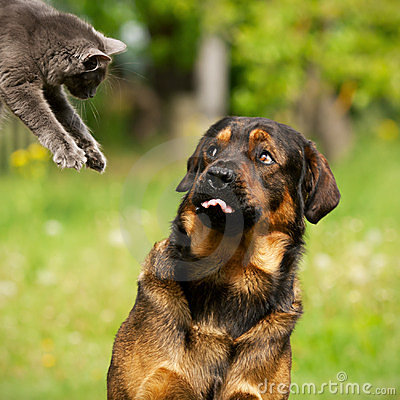 собака кота