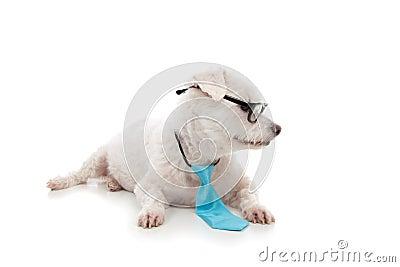 σκυλί που φαίνεται έξυπνα σας κατοικίδιων ζώων μηνυμάτων