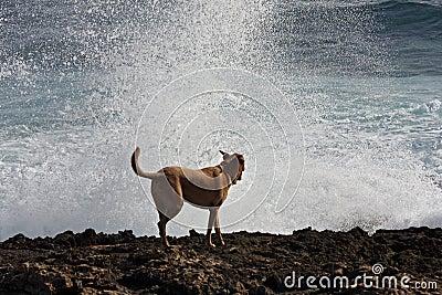 σπάζοντας κύματα