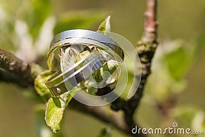 δαχτυλίδια δύο γάμος