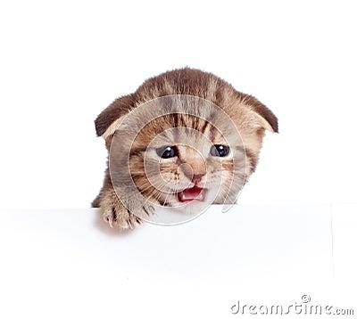 απομονωμένο μωρό γατάκι που τα σκωτσέζικα