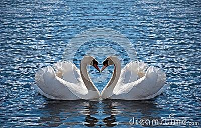 лебедь сердца