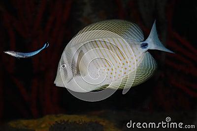 异乎寻常的鱼