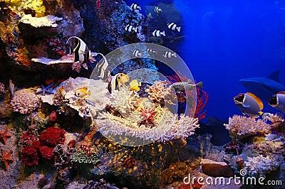место подводное