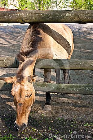 马吃草 免版税库存图片 - 图片: 24614176