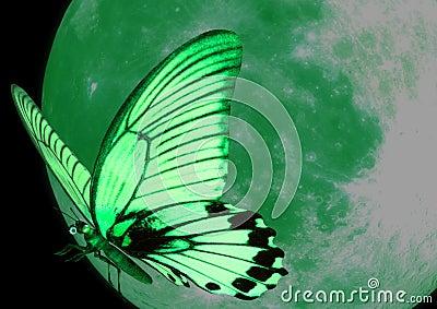 зеленый цвет бабочки