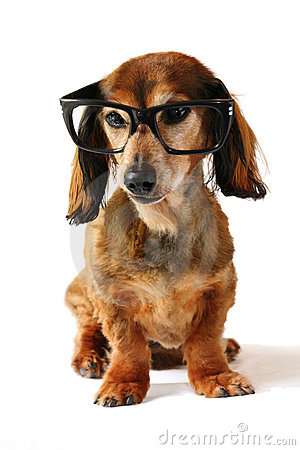 σκυλί έξυπνο