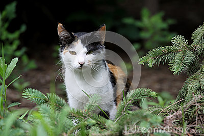 Μια γάτα