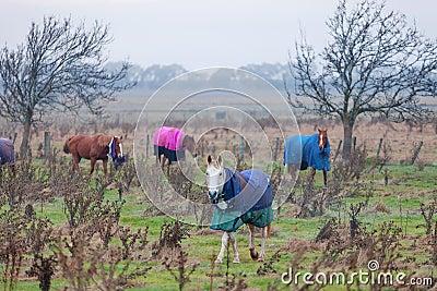 马在牧场地