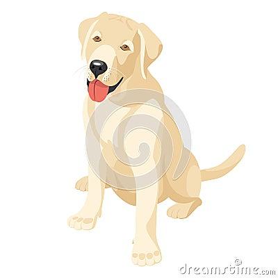 拉布拉多(猎犬)