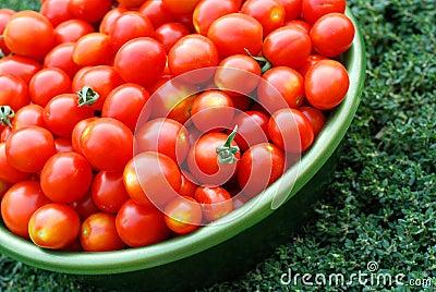 在水池的生态学蕃茄