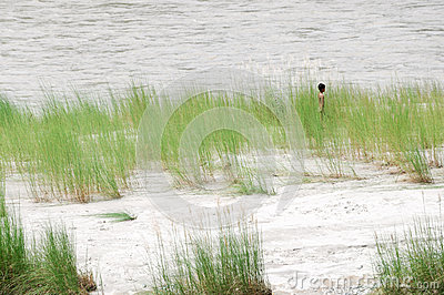 河河岸的尼泊尔子项 图库摄影片