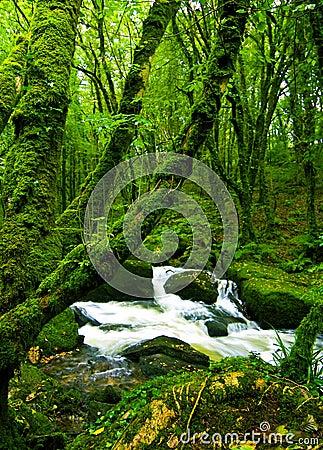 流在绿色森林里