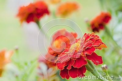 Πορτοκαλί λουλούδι