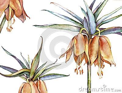 百合属植物