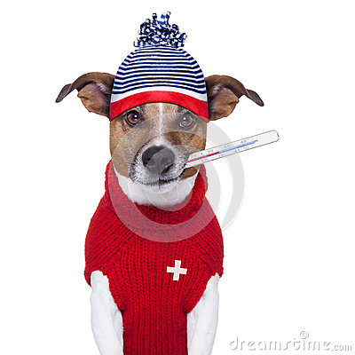 病的不适的冷狗以热病