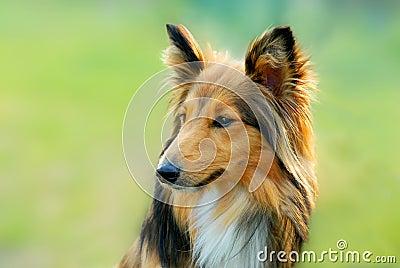 σκυλί