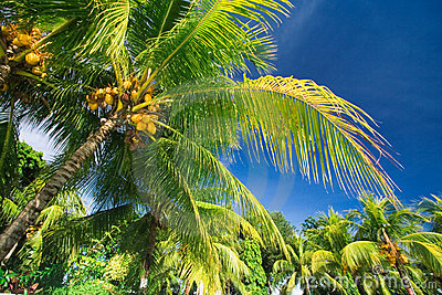 掌上型计算机热带天堂的结构树