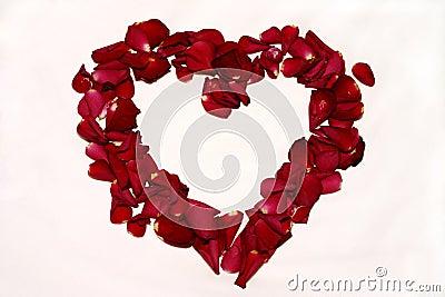 розы влюбленности