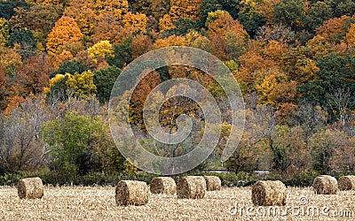 Связки сена и цвет падения