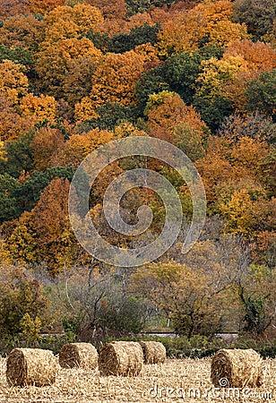 干草捆和秋天颜色