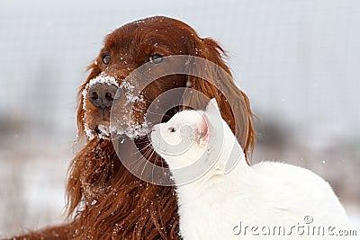 Σκυλί και γάτα