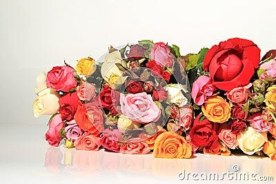 玫瑰拉丁文