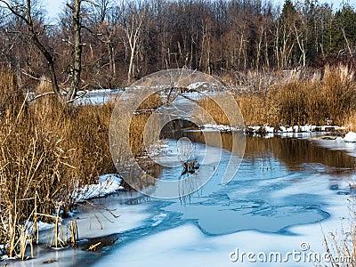 在沼泽的冬天