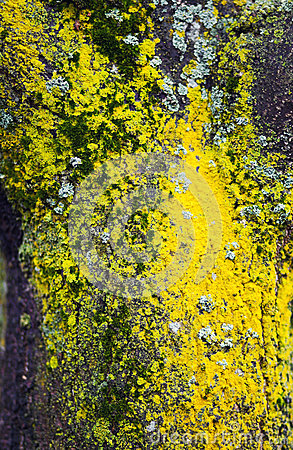 Покрашенный мох на дереве