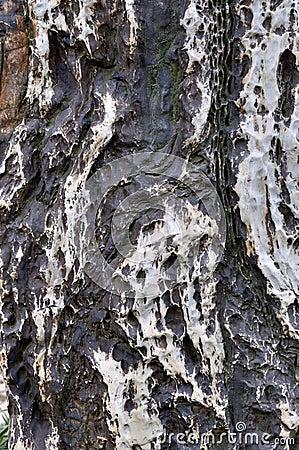 Каменные поверхность, цвет и текстура
