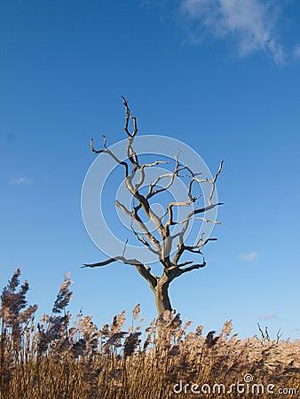 Дерево под голубым небом