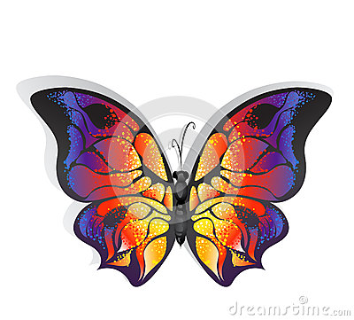 明亮的蝴蝶