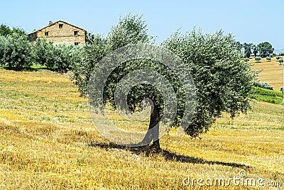 Марты (Италия) - ландшафт