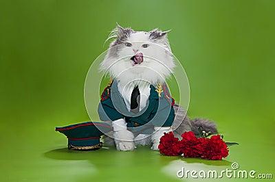 作为将军穿戴的猫