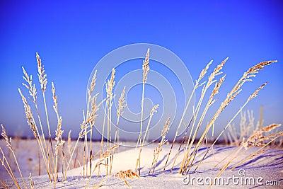 Ландшафт зимы