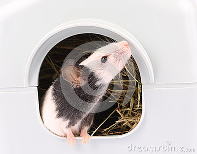 从它出来的小的老鼠是孔