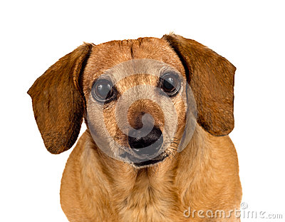 Собака щенка смотря вас