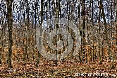 森林在秋天