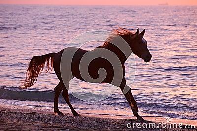 Лошадь бежать через воду