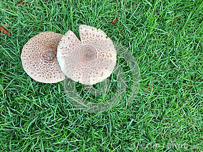 两蘑菇在庭院里