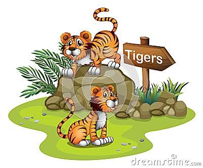 与一个 木箭头 板的两只老虎 免版税库存图片
