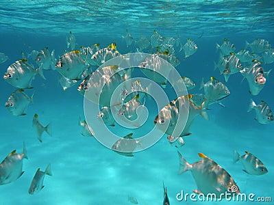 Тропические рыбы